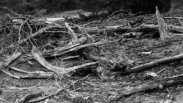 Stoer verweerd hout van Richard de Ruijter