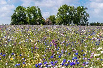 Prairie fleurie sur Jim van Iterson