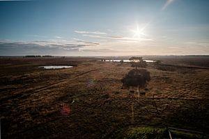 ausgedehntes Heideland während sehr trockener Sommer von FHoo