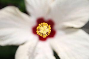 The Yellow Flower Pistil