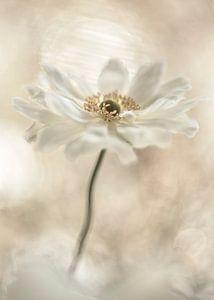 Blumenhimmel