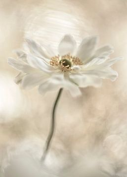 Floral heaven van Christl Deckx
