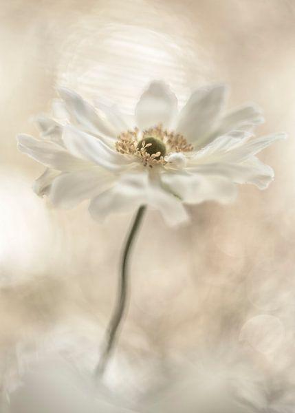 Blumenhimmel von Christl Deckx