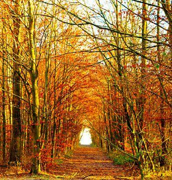 Herfst Bos van Vincent Vagevuur