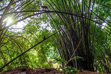 Gigantische bamboe in bos met zon en apen van Ruurd Dankloff