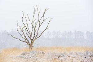 Dode boom in winterlandschap