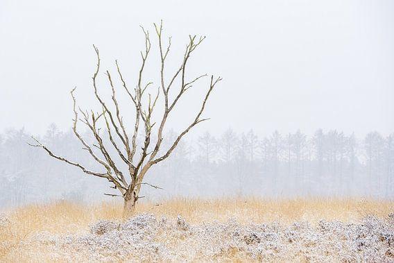 Dode boom in winterlandschap van Gonnie van de Schans