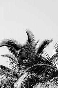 Speelse palm bladeren van
