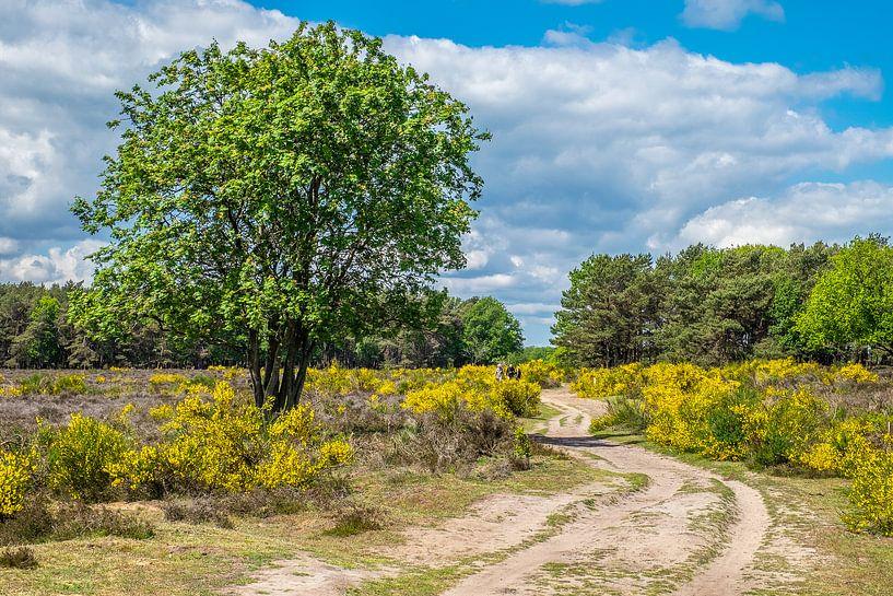 Hilversumse Heide van Hans Lebbe