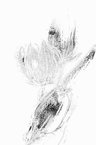 Tulp 3 (serie )