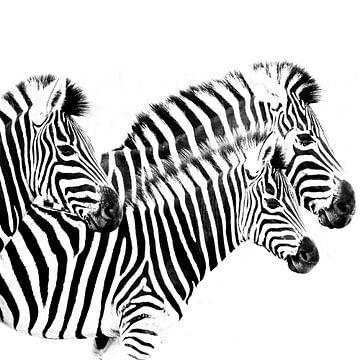 Stripes... von Alexandra Hegemann