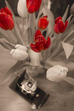 Tulpen van Erik Reijnders