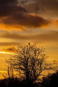 Silhouette eines Baumes mit Vogel bei Sonnenuntergang von Discover Dutch Nature