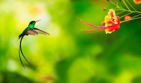 Hummingbird approaching flower