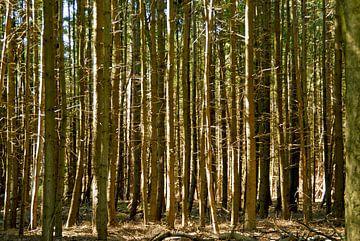 zon door de bomen van Luc van Alphen