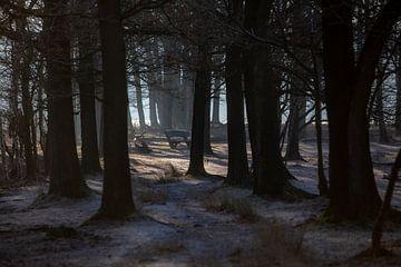 winters zonlicht von Menno Bausch