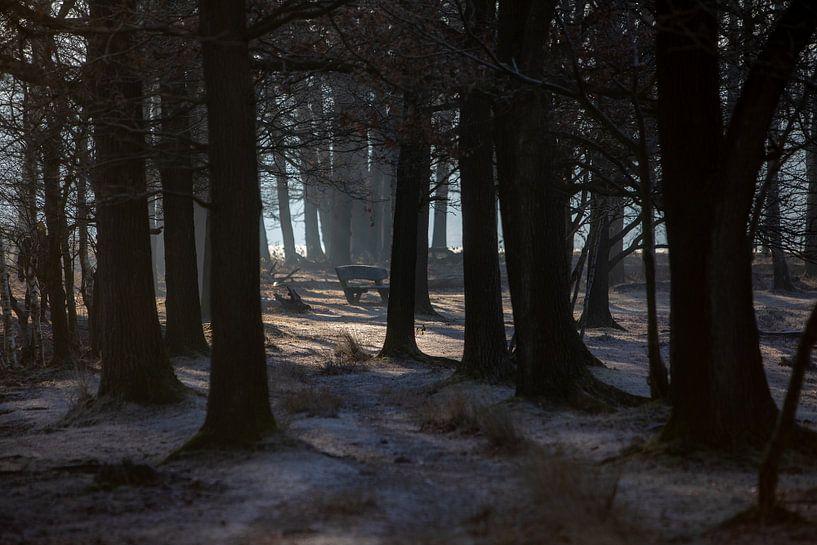 winters zonlicht van Menno Bausch