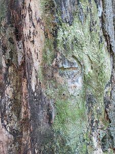 boomstam van