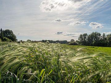 Stralend gras in zonlicht van