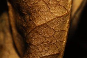 Close-up van een uitgedroogd blad