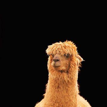 Portret van een bruine Alpaca van J..M de Jong-Jansen