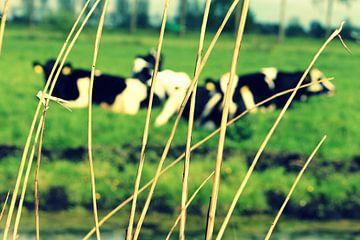 Koeien in de polder sur Naomi Kroon