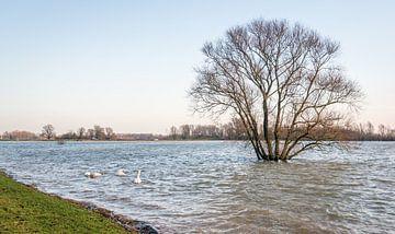 Ondergelopen polder Loevesteyn von Ruud Morijn