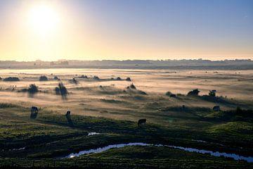 Morgennebel im Sumpf von Yerseke von Petra Slingenberg
