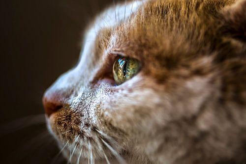 Kat Close-Up van