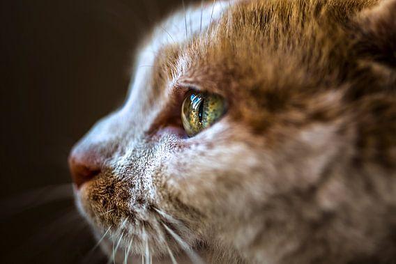 Kat Close-Up van Felicity Berkleef