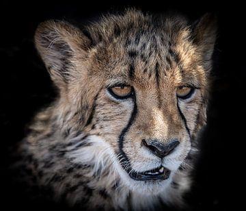 Portret van Cheeta welp in Namibië van Jille Zuidema