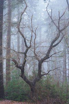 Een boom in de mist van zeilstrafotografie.nl