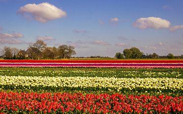 Tulpenveld van Marga Vroom