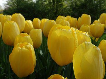 Yellow Power von Ronald Wakker