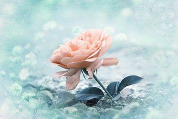 Rose am Strand mit Textur von Susanne Bauernfeind