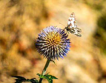 Papillon sur fleur sur Jorrit Eijgensteijn