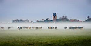 Koeien in de mist van