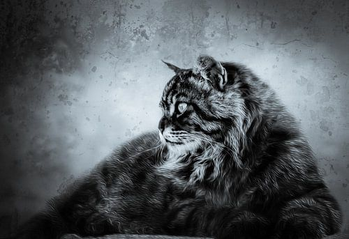 Kat king van Freddy Hoevers