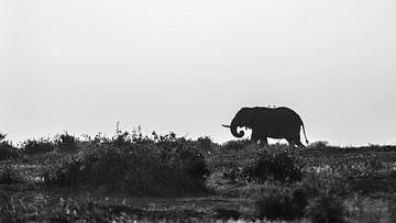 Kenia | White Mountain Movement 7 von Mariëlle de Valk