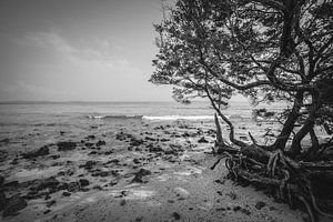 De ruwe kustlijn van