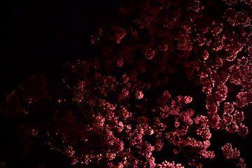 Kirschblüte von Helene Peters