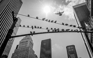 Tauben in New York von marijn zeilstra