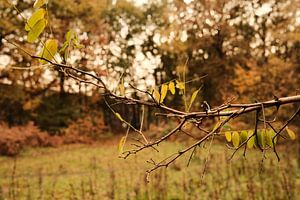Herbst-Filiale
