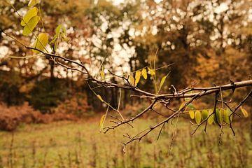 Herbst-Filiale von Colin van der Bel