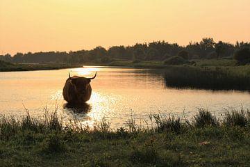 Silhouette sur Landelijke foto's uit Brabant