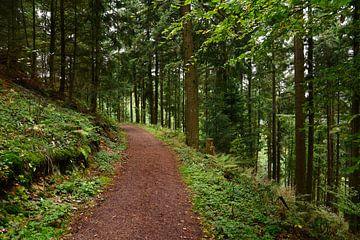 Forest Walk van Gisela Scheffbuch
