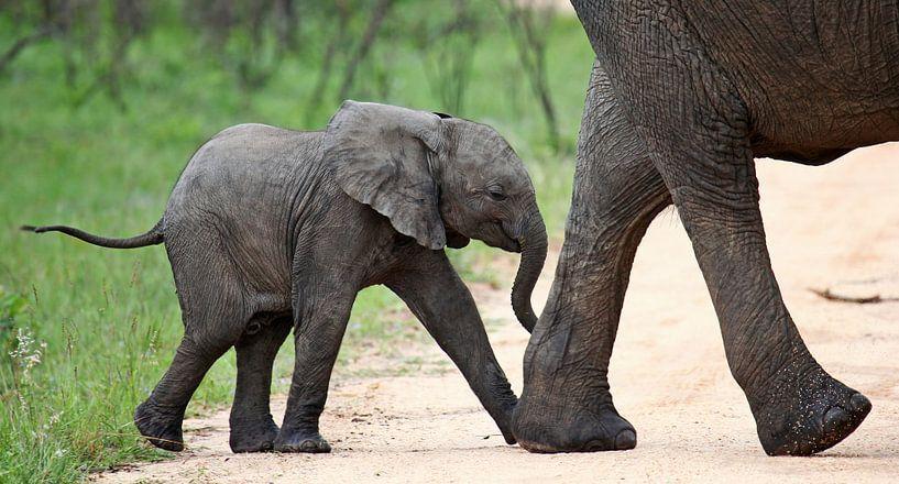 Mom and me - Africa wildlife van W. Woyke
