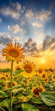 Sonnenblumenfeld im Sonnenuntergang | Panorama vertikal von Melanie Viola