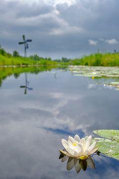 Seerose in einem Kanal im Naturschutzgebiet Weerribben-Wieden von Sjoerd van der Wal