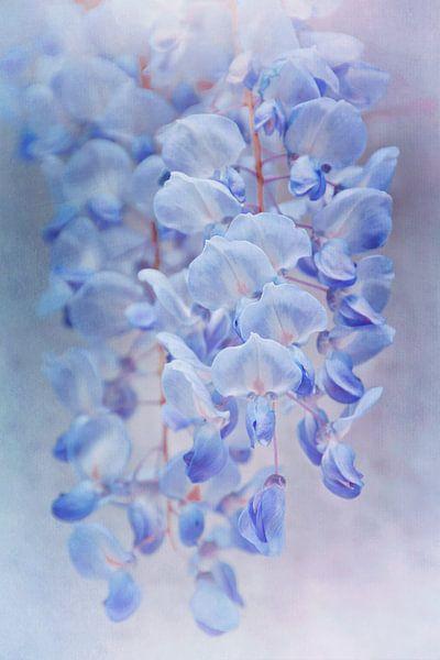 Blauwe regen van Claudia Moeckel